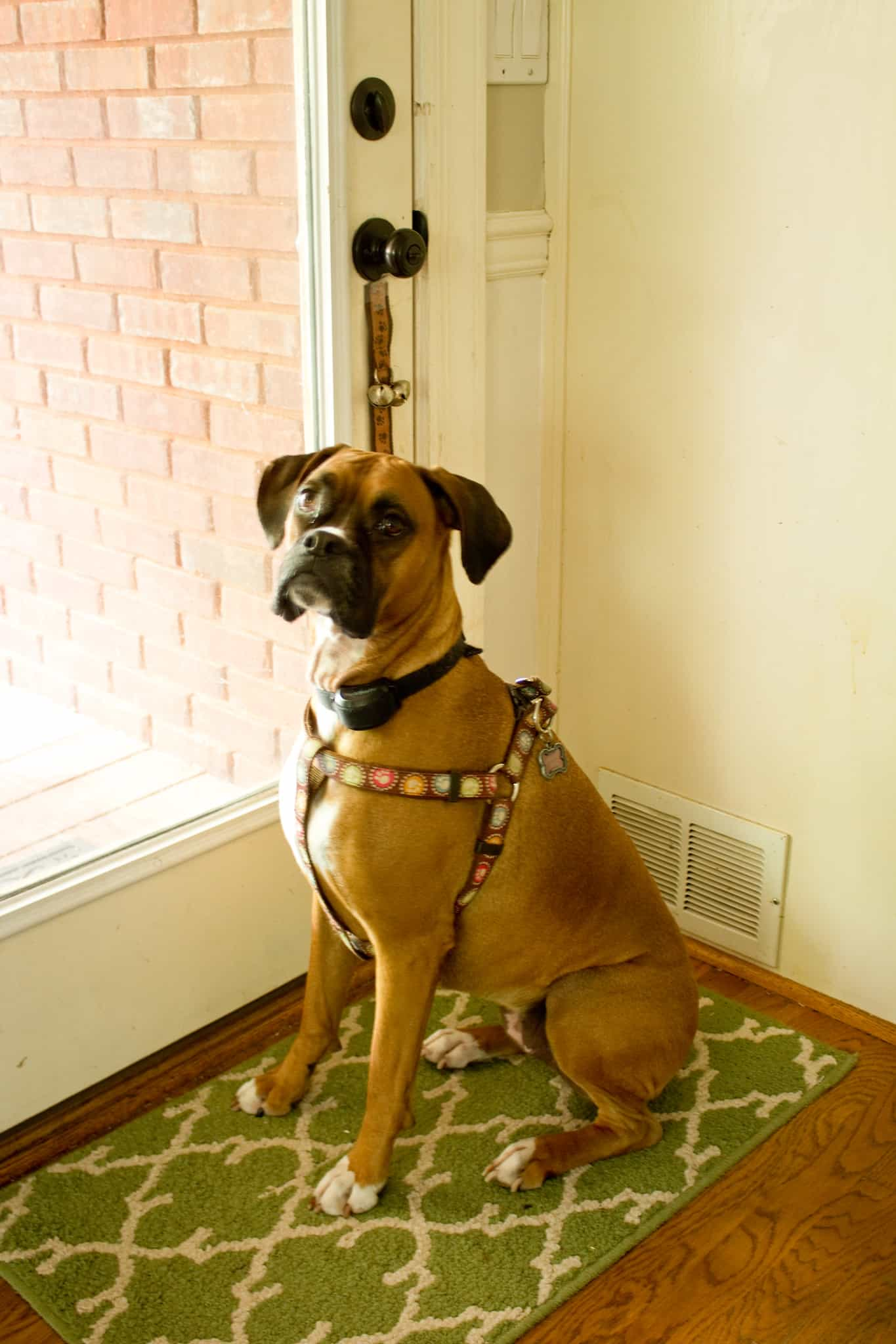 How To Train A Dog To Go Potty Outside