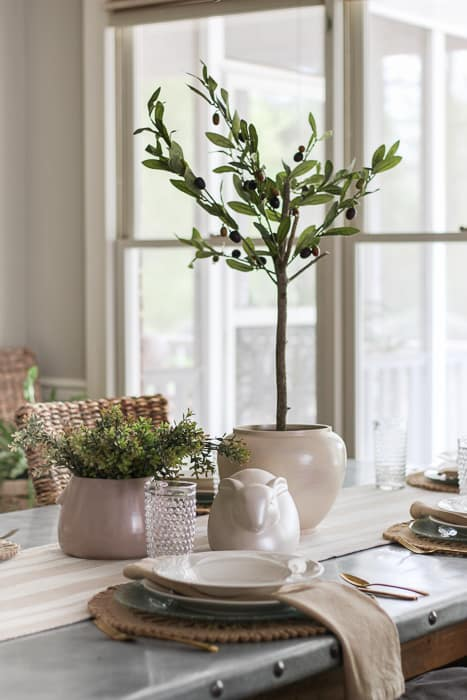 Olive tree for table centerpiece